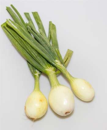 Cebolleta (100 gr.)