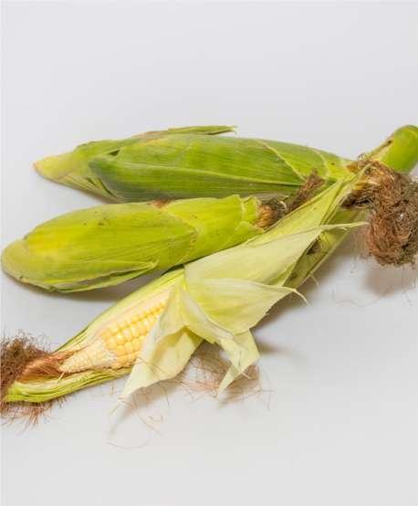 Piñas de millo (Ud.)